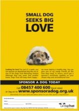 small-dog-seeks-big-love